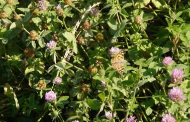 p1160583 farfalla